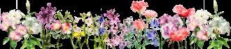 Flower-Banner-sml